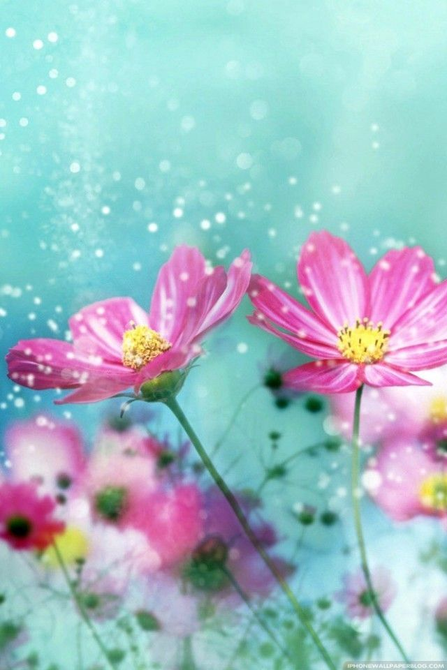 Fonds d 39 cran de fleurs pour iphone ipod 1 for Fond ecran ete fleurs