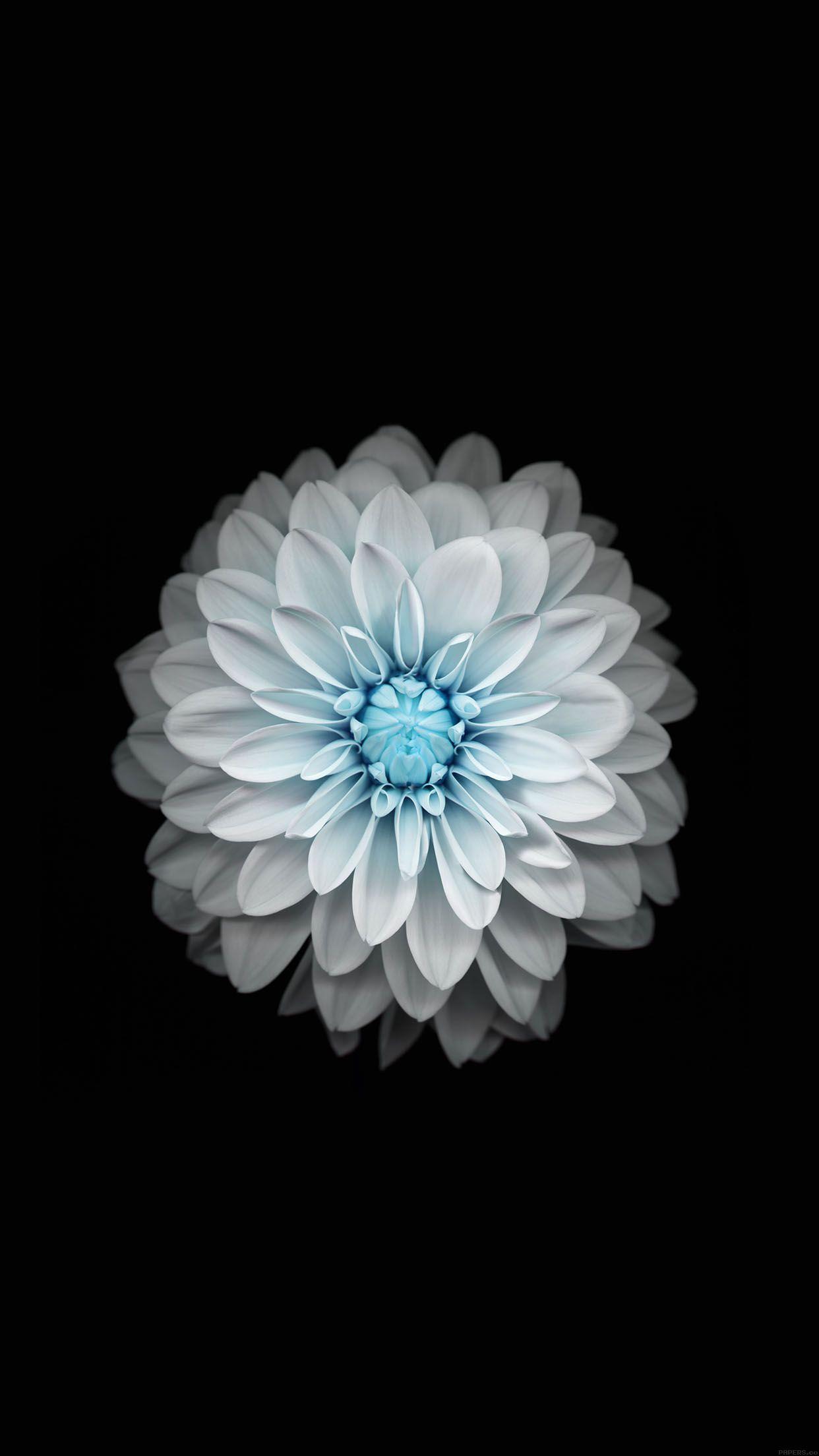 5 fonds d 39 cran fleuris pour iphone et ipad for Fond ecran iphone 6 plus