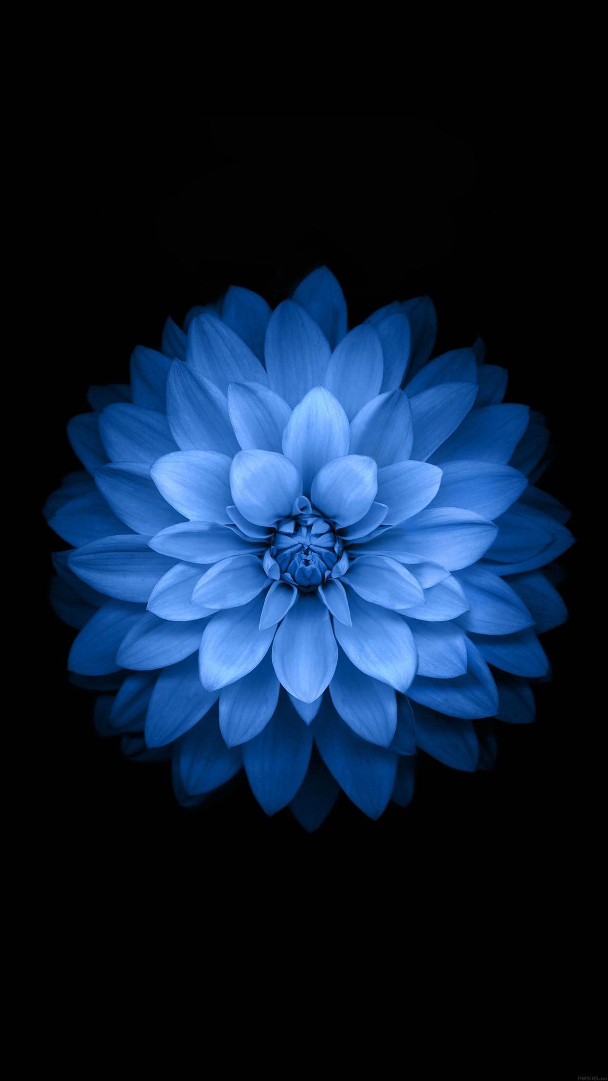 Sehr 5 fonds d'écran fleuris pour iPhone et iPad WF64