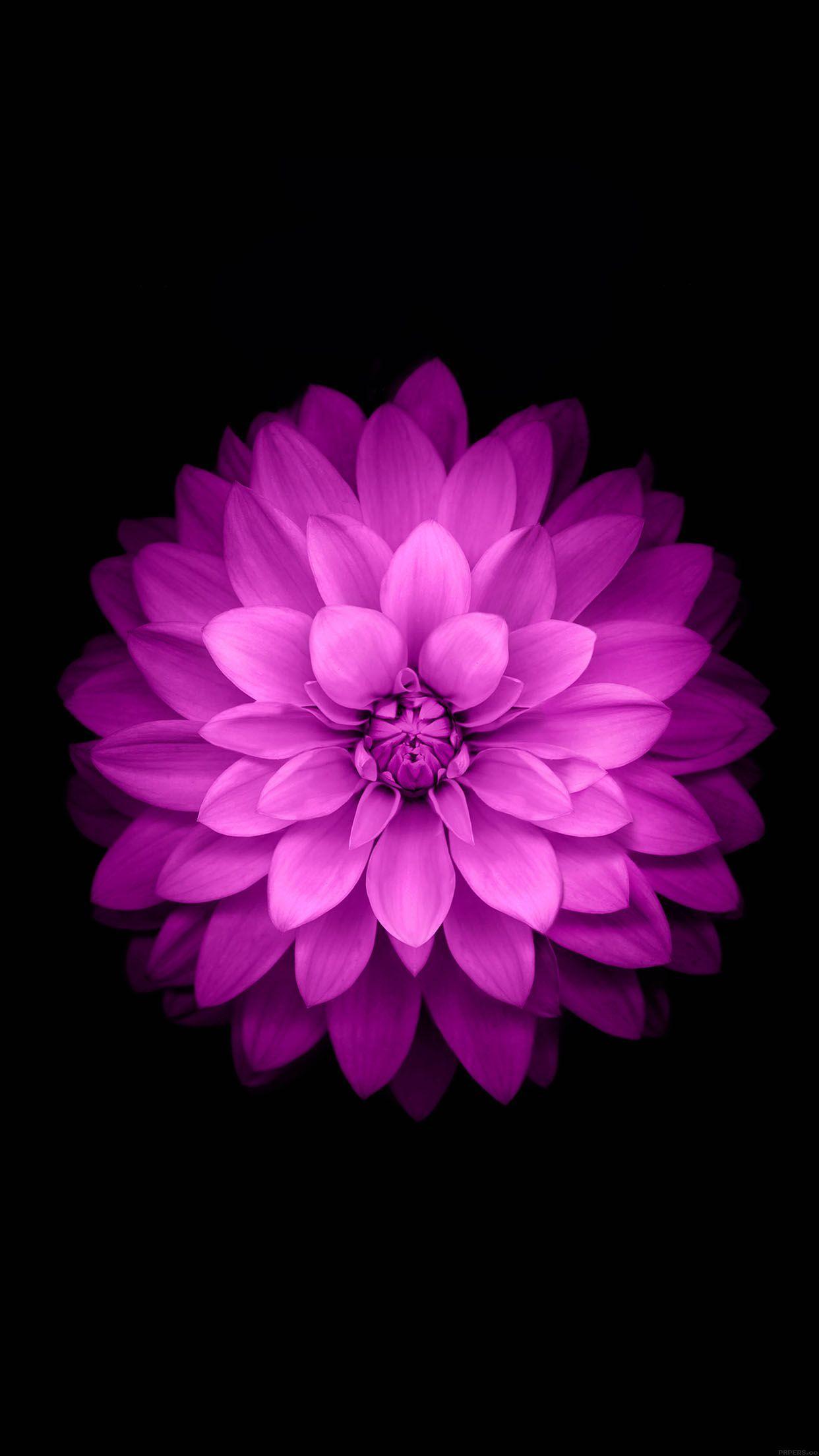 Fond D Ecran Fleur Rose Iphone Idee D Image De Fleur