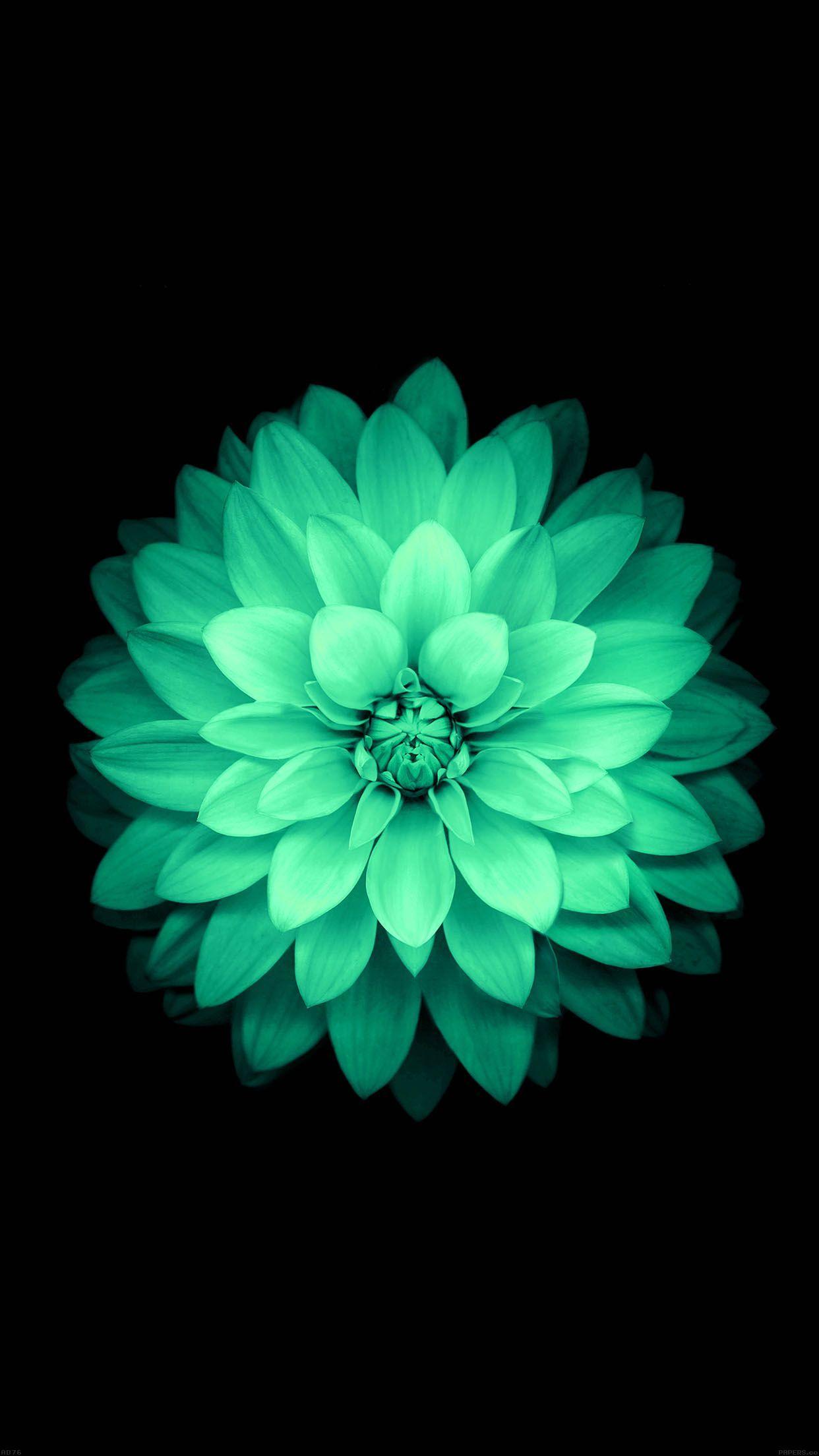 5 fonds d 39 cran fleuris pour iphone et ipad for Image pour fond ecran iphone