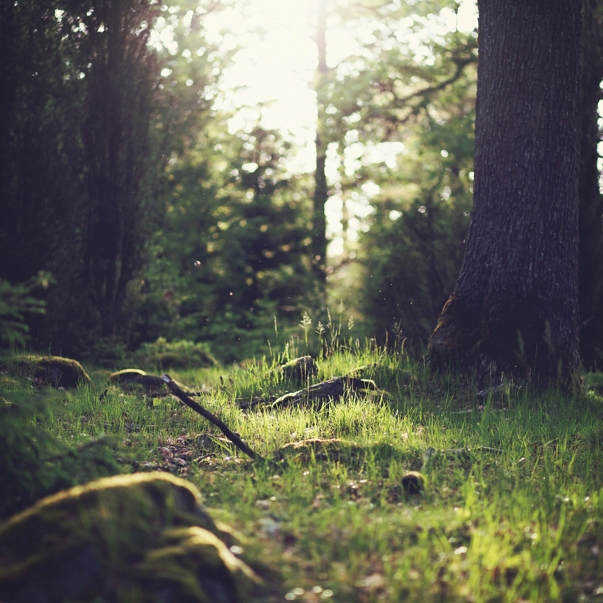 5 fonds d 39 cran nature 1 pour tous les iphone ipod et ipad for Image nature hd pour pc