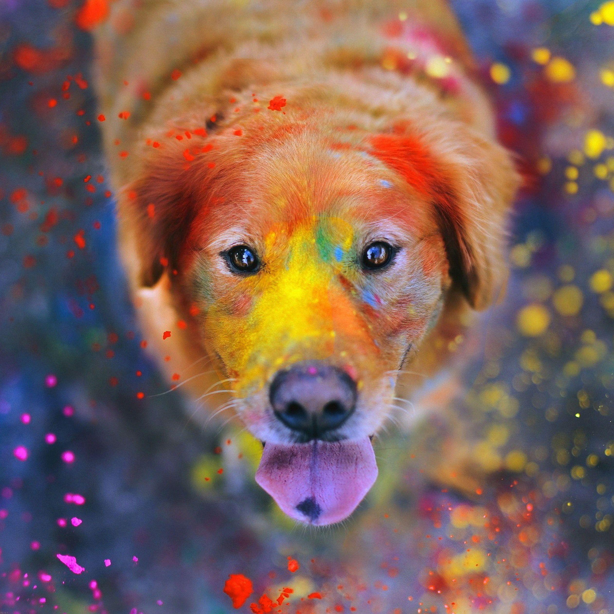 wallpaper hd retina chats chiens apple iphone