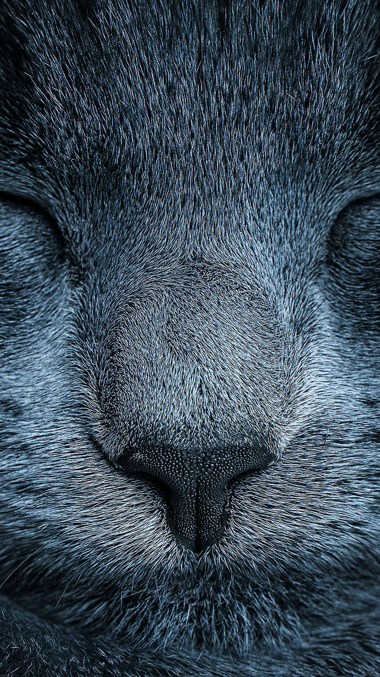 Fabulous 5 fonds d'écran chats et chiens pour iPhone et iPad OK33